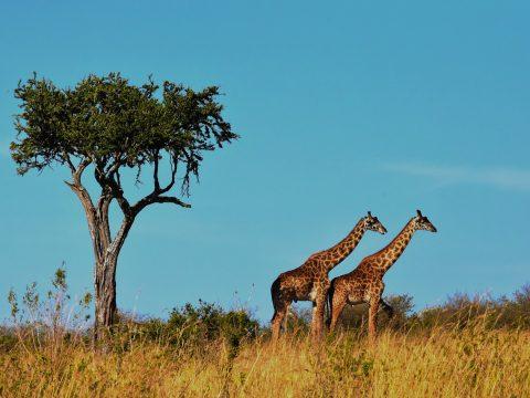 Parcs Safari Tanzanie